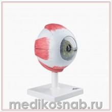 Модель глаза, 5-кратное увеличение, 6 частей