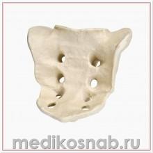 Крестец из плотного и прочного материала ORTHObones Премиум