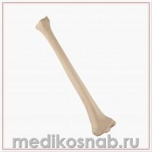 Большеберцовая кость левая ORTHObones Стандарт