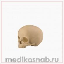 Полый череп ребенка с опорным блоком ORTHObones Стандарт