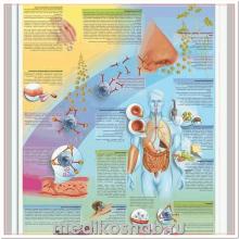 Плакат медицинский Аллергия