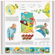 Плакат медицинский Инфекции дыхательных путей
