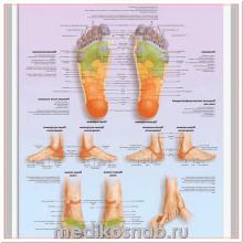 Плакат медицинский Массаж рефлекторных зон стопы