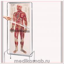 Набор прозрачных анатомических плакатов Человек
