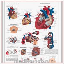 Плакат медицинский Сердце человека, анатомия и физиология
