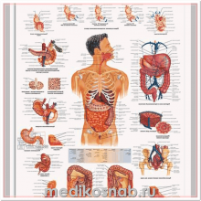 Плакат медицинский Желудочно-кишечный тракт